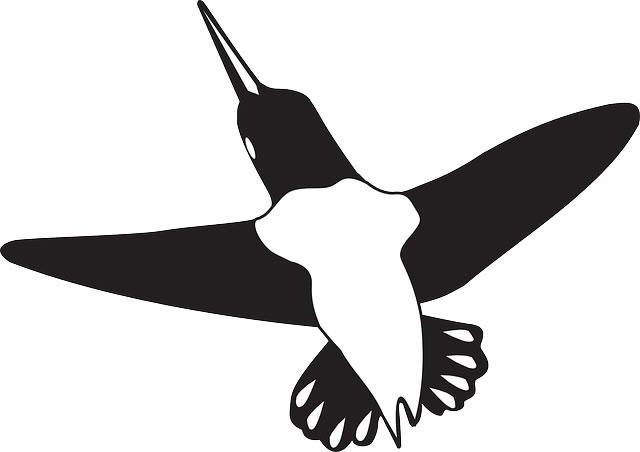 Nuevo algoritmo de búsqueda Google Colibrí (Hummingbird search algorithm)
